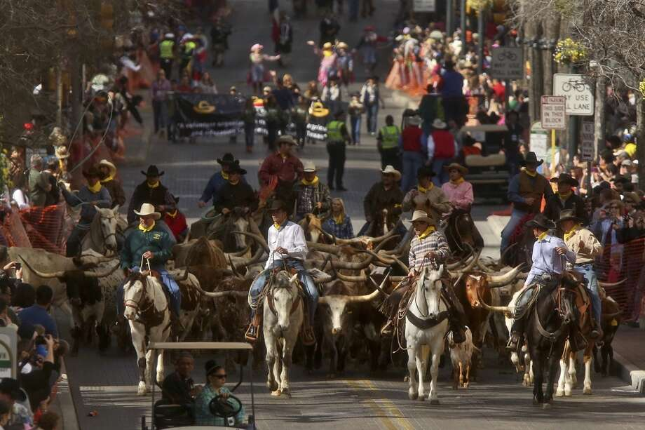 The Cattle Drive, followed by the Western Heritage Parade, moves along Houston Street through downtown San Antonio on Saturday, Feb. 2, 2013. Photo: Lisa Krantz, Express-News
