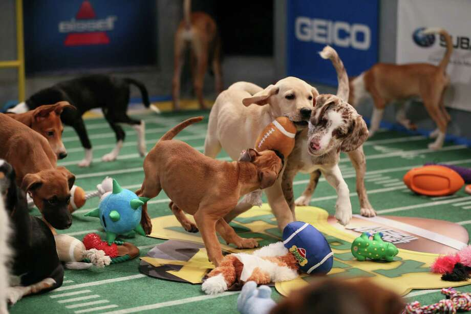 Puppies battle for the ball during Puppy Bowl X. Photo: Damian Strohmeyer / Discovery Communications, Inc