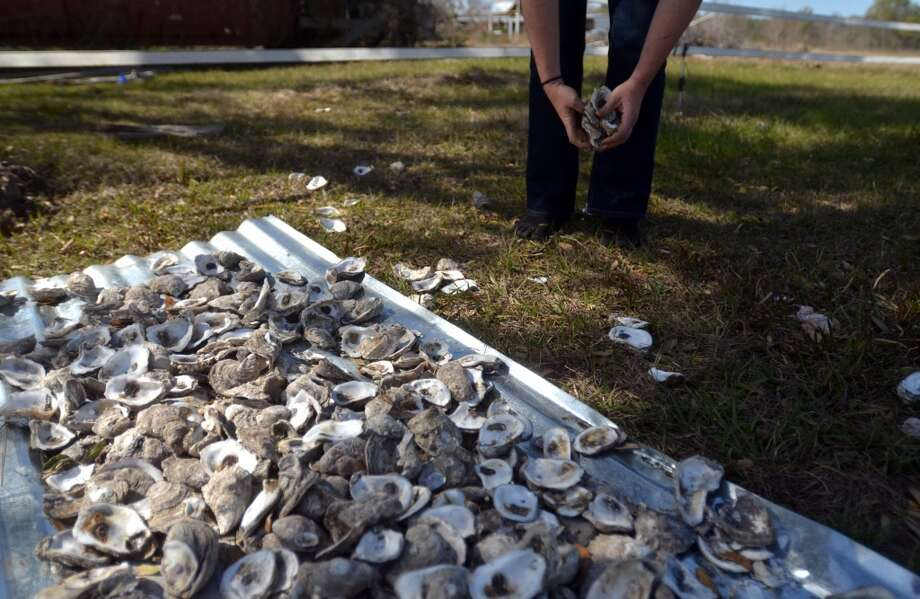Gulf oyster shells from the Slow Food Beaumont Oysterfest will not go to waste - after letting rain wash off the salt, Rachel Wilson, owner of Rachel's Ranch House in LaBelle, will crush them and add them to eggplant and tomato beds to supplement the plants with added calcium. Photo: Cat5
