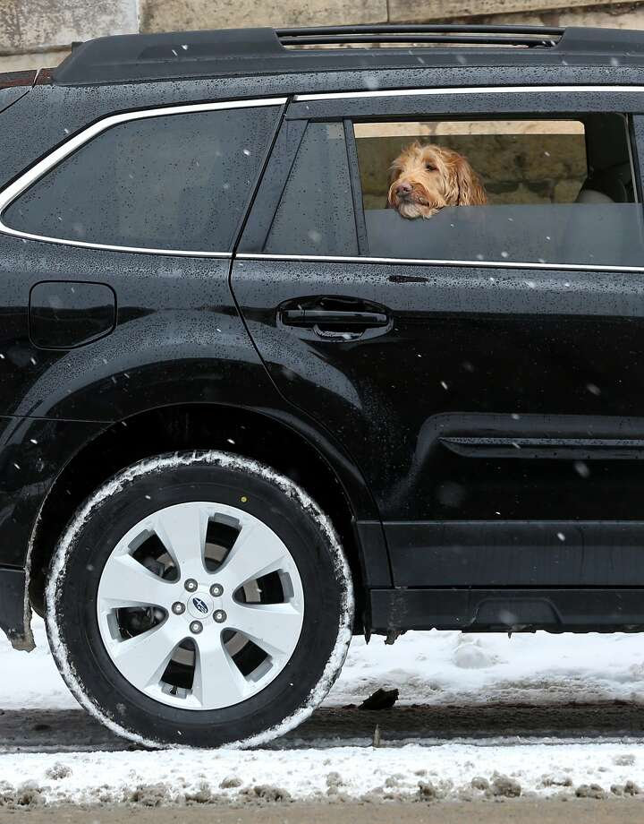 Subwoofer in the rear: A canine views winter in Dubuque, Iowa, from the comfort of the backseat of an 