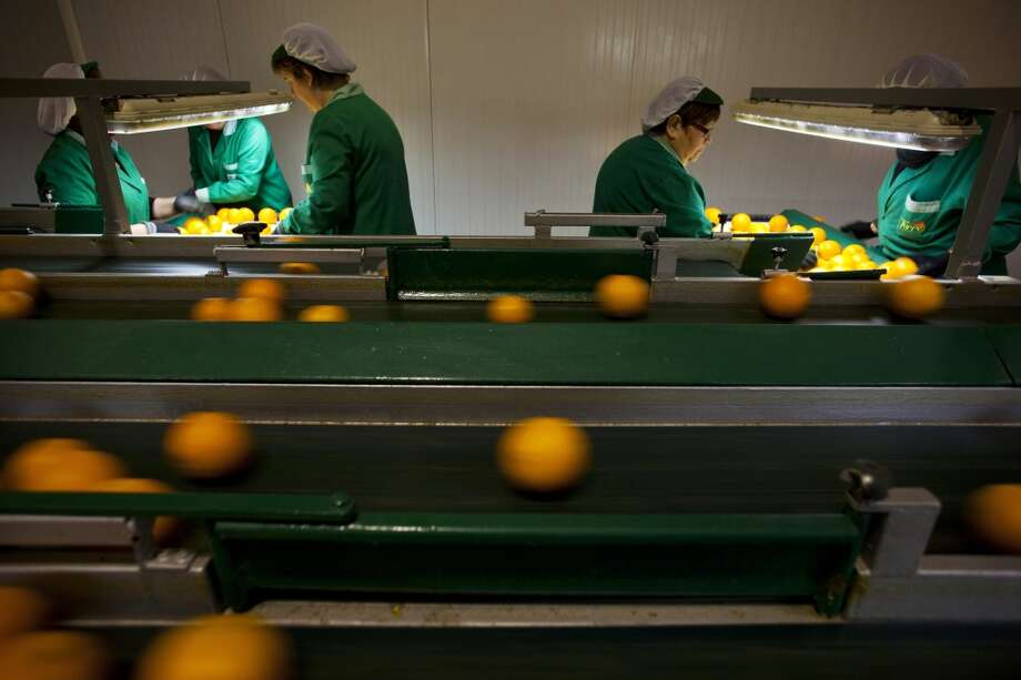 Spain: Workers select recently harvested oranges on a conveyor belt in the Naranjas Torres fruit processing center, operated by Torres Hermanos y Sucesores SA, in Almenara, Spain. Photo: Angel Navarrete, Bloomberg
