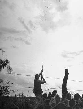 A hunter raising his shotgun at a flock of doves, 1946. Photo: Cornell Capa, Time & Life Pictures/Getty Image