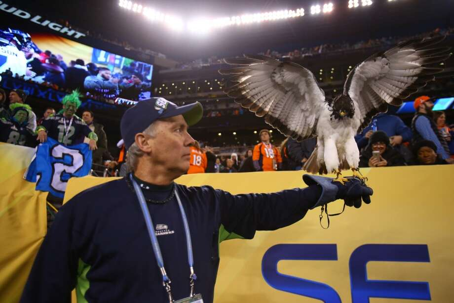 Dave Knutson holds the Seattle Seahawks bird at MetLife Stadium at Super Bowl XLVIII Sunday, Feb. 2, 2014, in New Jersey. (Joshua Trujillo, seattlepi.com) Photo: JOSHUA TRUJILLO, SEATTLEPI.COM
