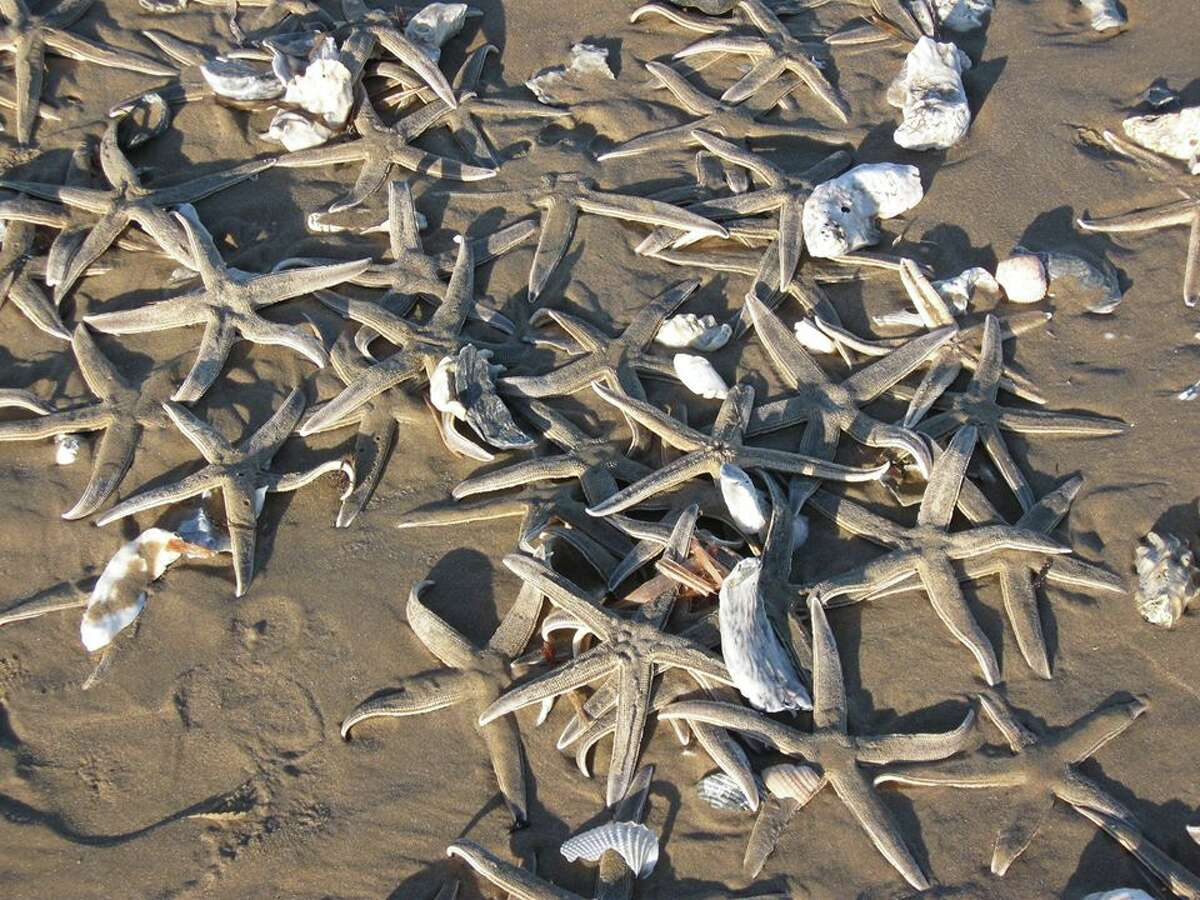 Thousands of starfish on the beaches of South Padre Island after rough weather conditions leave them stranded.