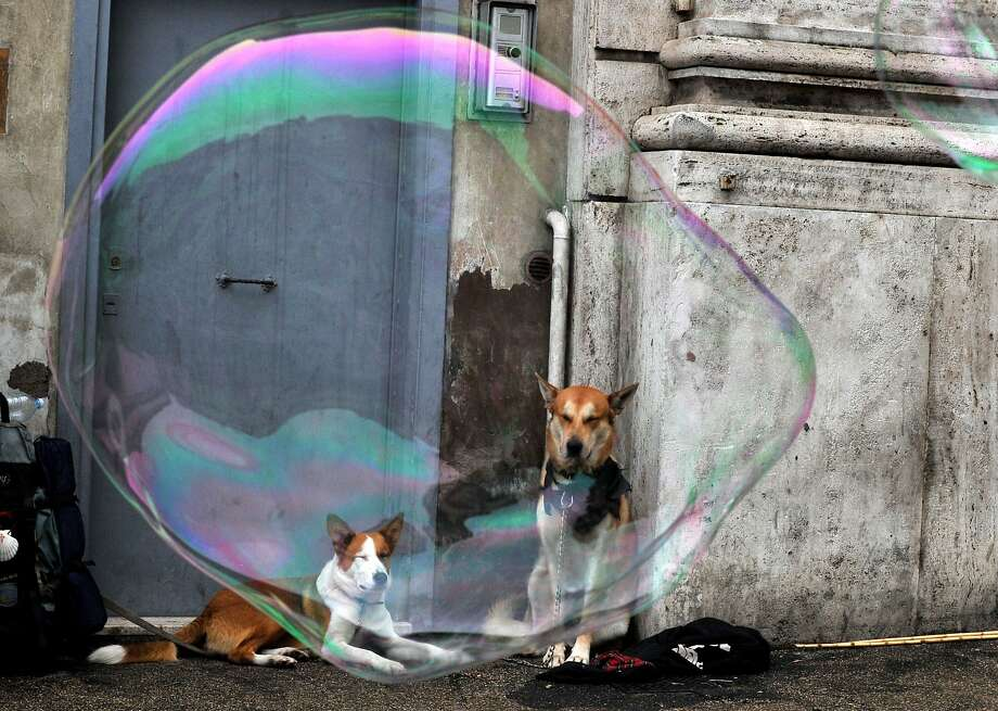 Popolo pups:Soap bubbles blown by an unseen street artist float by dogs in the Piazza del Popolo in Rome. Photo: Tiziana Fabi, AFP/Getty Images