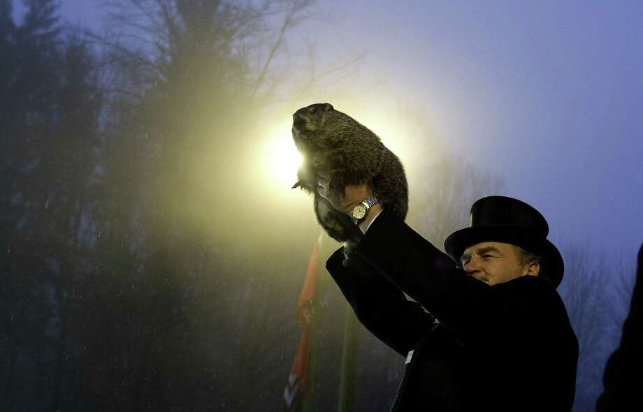 PUNXSUTAWNEY, PA - FEBRUARY 2: Groundhog handler John Griffiths holds Punxsutawney Phil after he saw his shadow predicting six more weeks of winter during 128th annual Groundhog Day festivities on February 2, 2014 in Punxsutawney, Pennsylvania. Groundhog Day is a popular tradition in the United States and Canada. A smaller than usual crowd this year of less than 25,000 people spent a night of revelry awaiting the sunrise and the groundhog's exit from his winter den. If Punxsutawney Phil sees his shadow he regards it as an omen of six more weeks of bad weather and returns to his den. Early spring arrives if he does not see his shadow, causing Phil to remain above ground. (Photo by Jeff Swensen/Getty Images) *** BESTPIX *** ORG XMIT: 463533695 Photo: Jeff Swensen, Getty / 2014 Getty Images