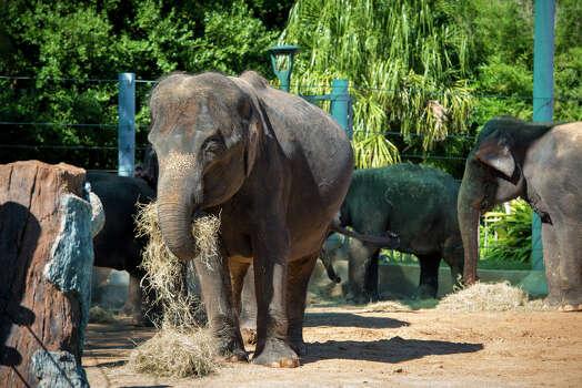 (Houston Zoo)