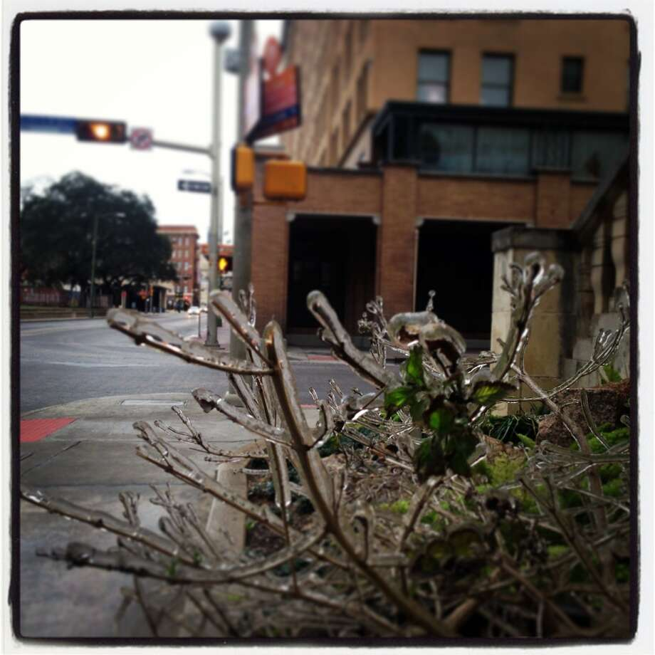 Icy plants outside Travis Park United Methodist Church the morning of Jan. 24.
