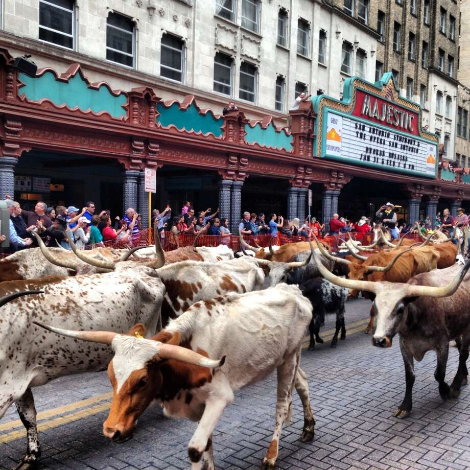 A drove of cattle march down Houston Street Feb. 1.
