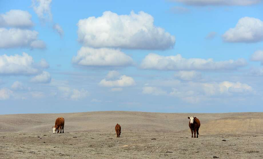 Dangerously dry: In any normal February, these fields on Nathan Carver's ranch near Delano in California's Central Valley would be lush emerald green. But the worst drought in decades has reduced the landscape to a dessicated brown, leaving the 55-year-old father of four praying for rain. Photo: Frederic J. Brown, AFP/Getty Images