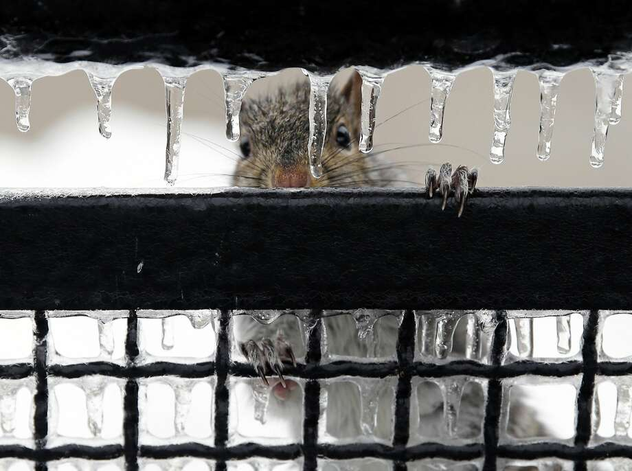 Can I come in? Seriously, it's frigging miserable out here. I promise I won't to nest in your attic or anything:A home in Trenton, N.J., gets a visitor during a freezing-rain storm. Photo: Mel Evans, Associated Press