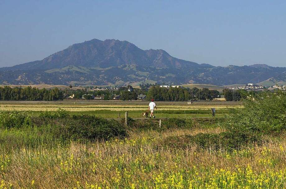 Mount Diablo is a backdrop for a hike along the Big Break Regional Shoreline near Antioch, which is part of the East Bay Regional Park District's annual Trails Challenge. Photo: Marc Crumpler