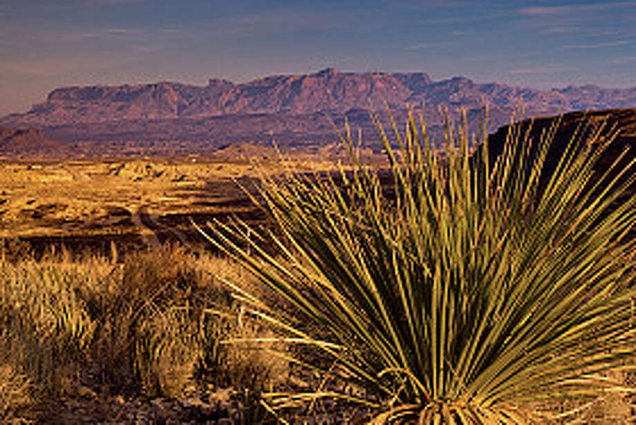 Chisos Mountains with sotol plants in foreground in Chihuahuan Desert, Big Bend National Park. Photo: Witold Skrypczak, Getty Images/Lonely Planet Images / Lonely Planet Images