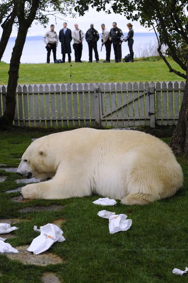 """DEAD BEAR WALKING "" Episode #5016 -- Pictured: (front) polar bear. Photo: USA Network, USA Network Via Getty Images"