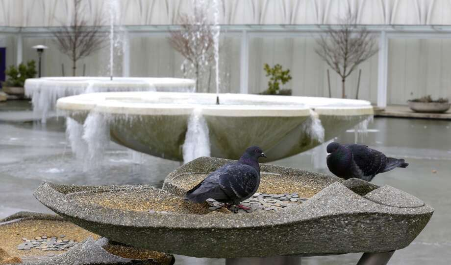 Birds look for food in near two frozen fountains at the Pacific Science Center on Thursday, Feb. 6, 2014. (AP Photo/Ted S. Warren) Photo: Ted S. Warren, AP