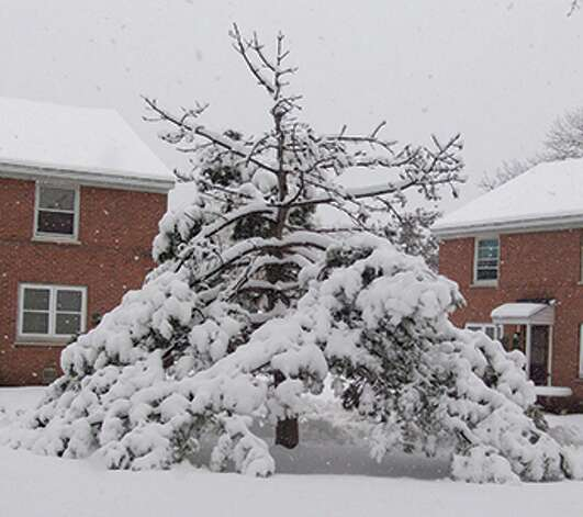 """Kurtis Miller of the Steinmetz Homes in Schenectady submits these words with his photo of a snow-covered tree resembling a wigwam. """"(Mother Nature) always gives us a token of her gesture; in this case she delivers a fantastic snowstorm blanketing the land with her glory.""""  (Kurtis L. Miller)"""