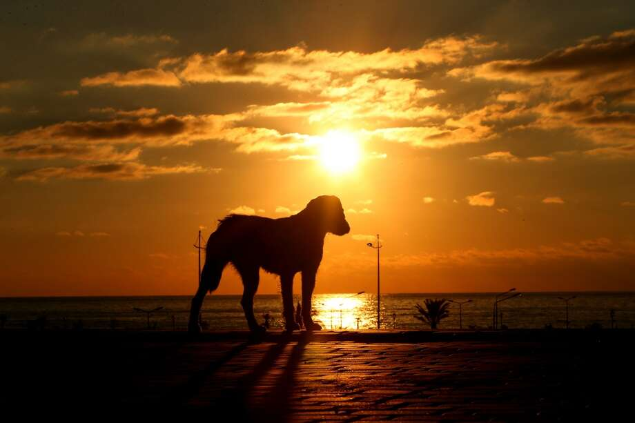 The sun sets behind a stray dog ahead of the Sochi 2014 Winter Olympics on February 2, 2014 in Sochi, Russia.  (Photo by Quinn Rooney/Getty Images) Photo: Quinn Rooney, Getty Images