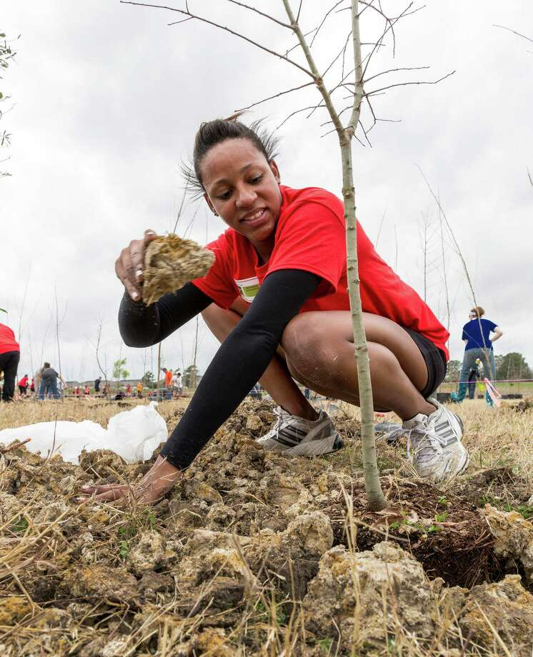 Brittani Gray of the Coca-Cola team labors to plant a tree during the Great Texas Tree Planting Competition. Photo: Craig Hartley, Freelance / Copyright: Craig H. Hartley