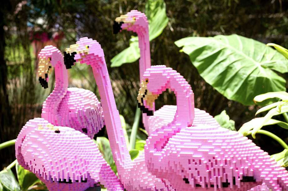 LEGO flamingos are seen in the new Animals Assembled exhibit during a preview at the Houston Zoo Friday, May 24, 2013, in Houston. More than two dozen LEGO brick animal sculptures, representing 10 species including flamingos, a tiger, zebra and fish are on display opening May 25 through Labor Day. Photo: Brett Coomer, Houston Chronicle / © 2013 Houston Chronicle