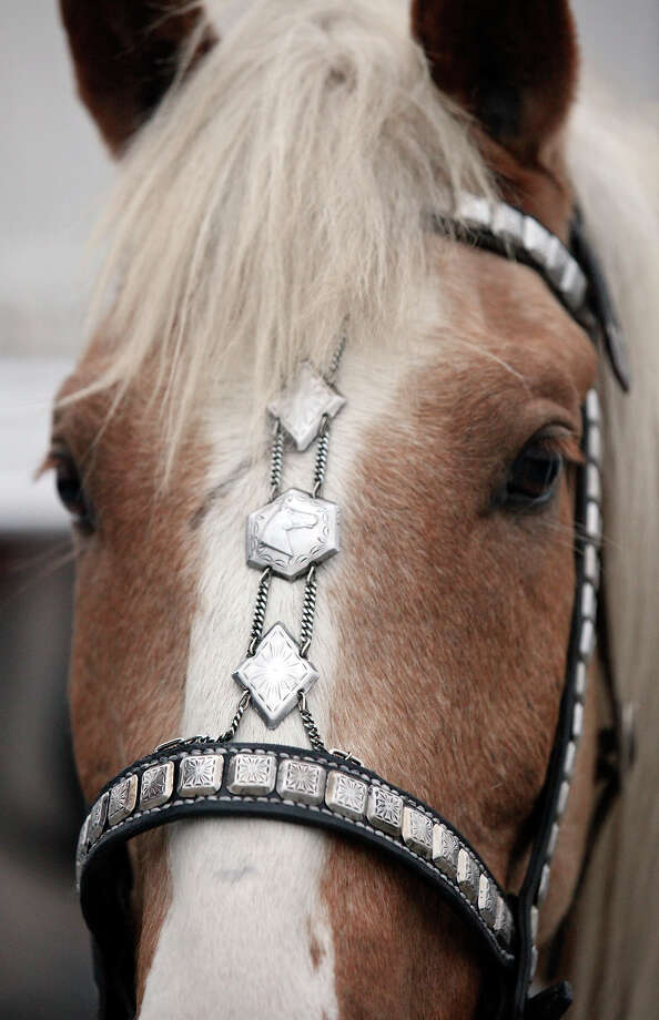 Detail of decoration on the bridle part of the Jack Sellers Bexar County Palomino Patrol, Inc. during the San Antonio Stock Show & Rodeo Thursday Feb. 6, 2014 at the AT&T Center. Photo: Edward A. Ornelas, San Antonio Express-News / © 2014 San Antonio Express-News