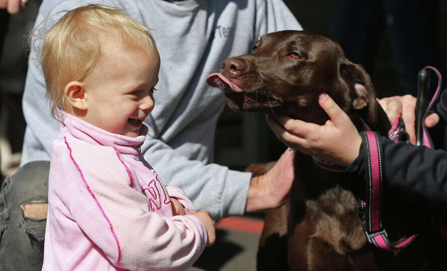 Rylee, a one-year-old chocolate lab, tries to kiss 16-month-old Penny Johnson, before the DockDogs,
