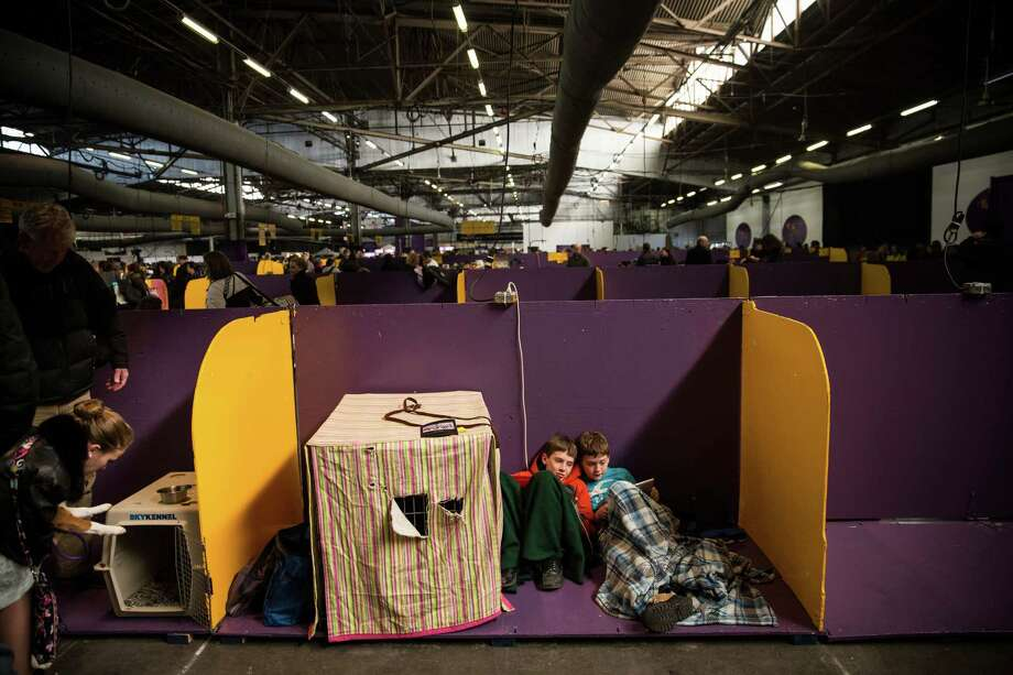 NEW YORK, NY - FEBRUARY 10:  Boys play on an iPad during the 138th annual Westminster Dog Show at the Piers 92/94 on February 10, 2014 in New York City. The annual dog show showcases the best dogs from around world for the next two days in New York. Photo: Andrew Burton, Getty Images / 2014 Getty Images