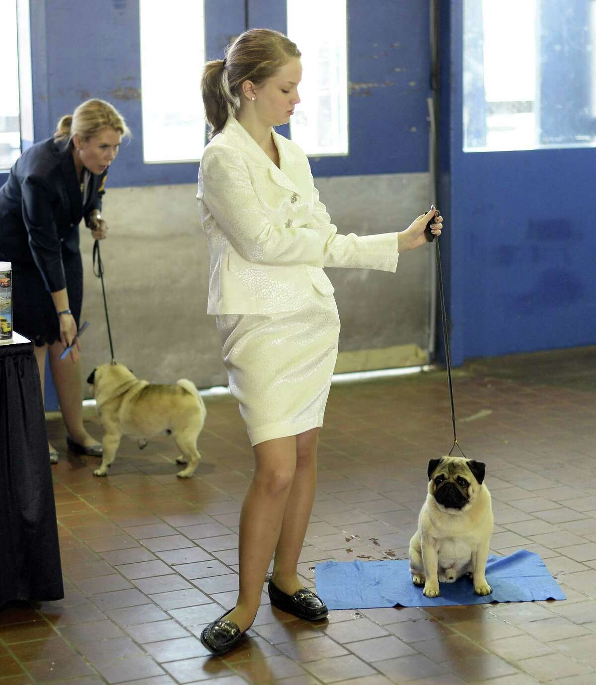 A handler waits with her Pug for judging to start at Pier 92 and 94 in New York City for the first day of competition at the 138th Annual Westminster Kennel Club Dog Show February 10, 2014. The Westminster Kennel Club Dog Show is a two-day, all-breed benched show that takes place at both Pier 92 and 94 and at Madison Square Garden in New York City .