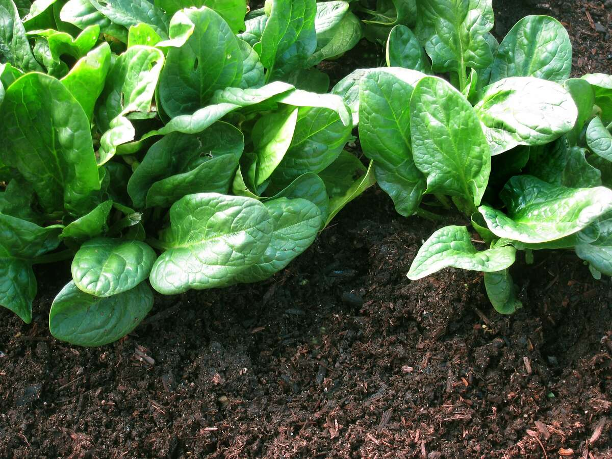 Growing healthy vegetables doesn't require you to replace your soil. To produce airy, water-retentive soil like this, just dig some organic amendment into it.