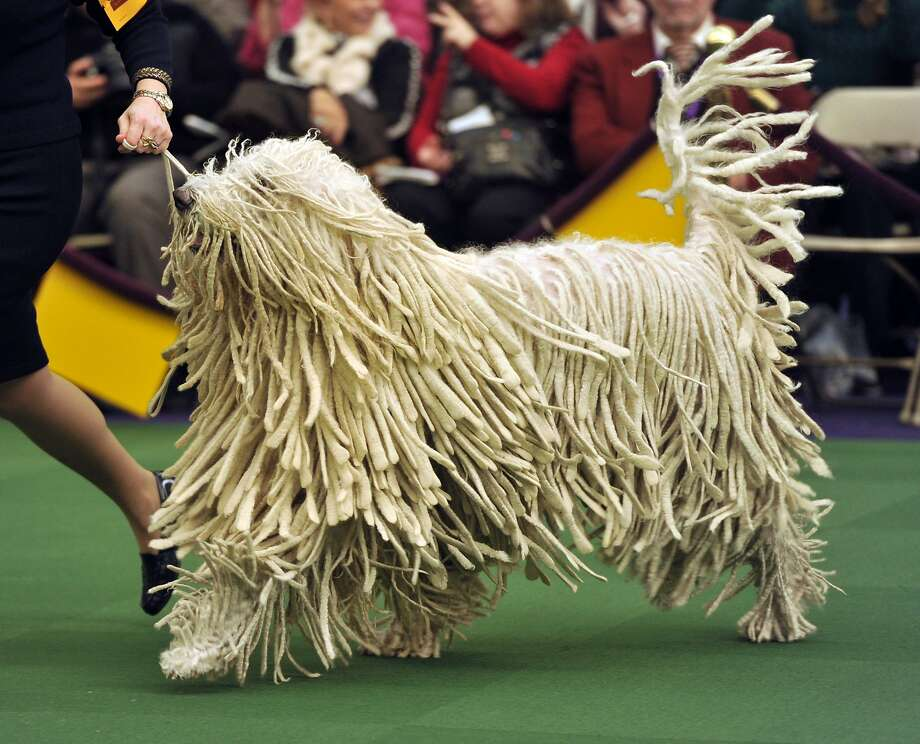 Rag mop, doo-doo-doo-dah-dee-ah-dah