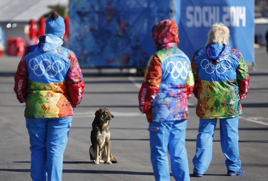 A stray dog sits near Olympic volunteers in Olympic Park ahead of the 2014 Winter Olympics, Thursday, Feb. 6, 2014, in Sochi, Russia. (AP Photo/Robert F. Bukaty) Photo: Robert F. Bukaty, Associated Press