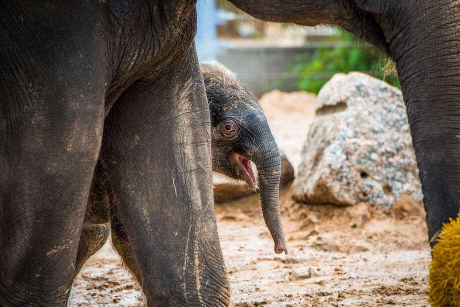 (Photos Courtesy of Houston Zoo) / © Houston Zoo/Stephanie Adams