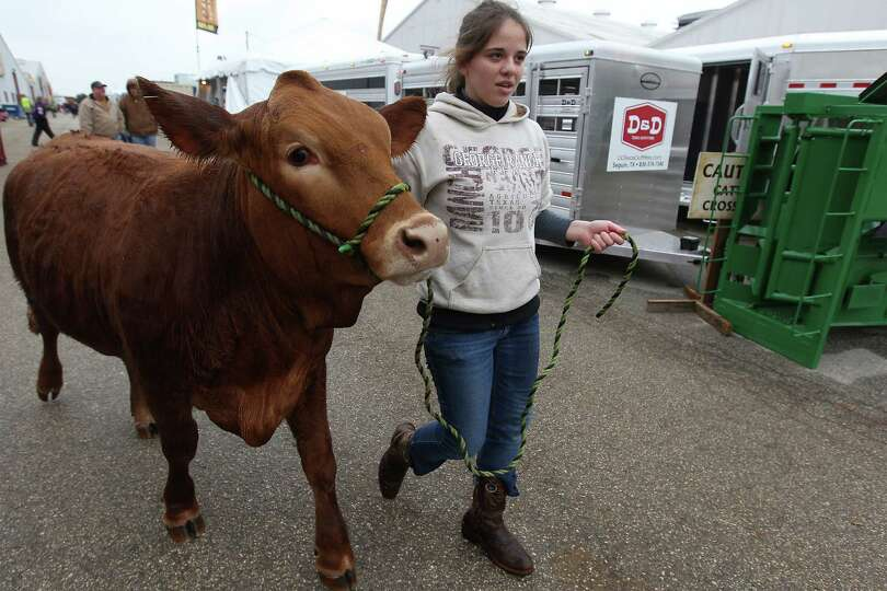 Nicole Stevenson, a junior from George Ranch High School in Richmond, Texas, walks her Simbrah heife