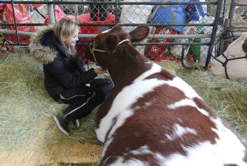 Cassidy Penney, 15, from Whitney, Texas keeps her short horn company in its holding pen at the 2014