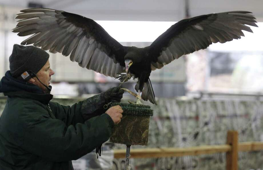 Exhibitor Jonathan Wood of The Raptor Project displays a vulture for spectators during the raptor and birds of prey show at the 2014 San Antonio Stock Show and Rodeo on Tuesday, Feb. 11, 2014. Photo: Kin Man Hui, San Antonio Express-News / ©2013 San Antonio Express-News