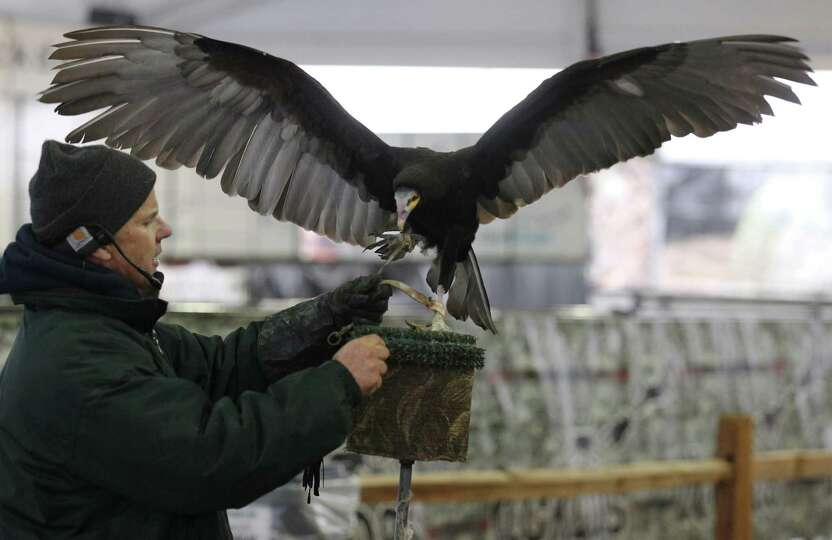 Exhibitor Jonathan Wood of The Raptor Project displays a vulture for spectators during the raptor an