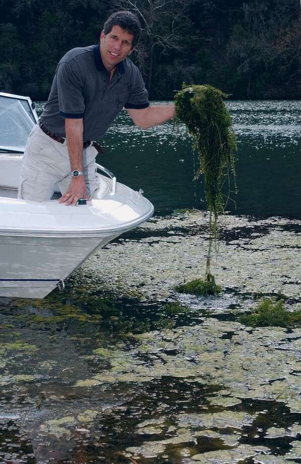 Kenneth Hausmann shows some of the hydrilla that thrives in Lake Austin. It took hold in 2002. Photo: HARRY CABLUCK, AP