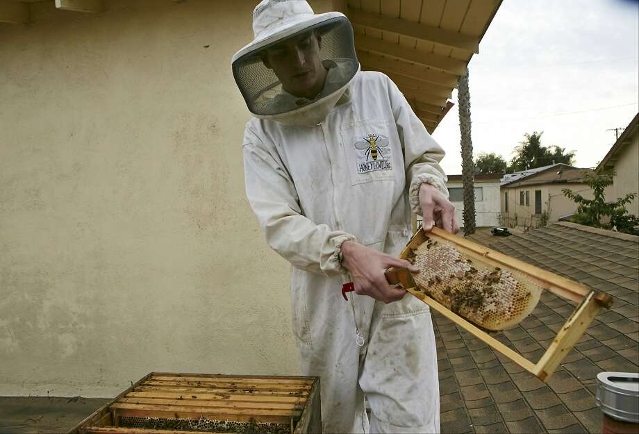 HoneyLove.org founder and beekeeper Rob McFarland inspects his beehive, which he has kept on the roof of his Los Angeles house for the past three years. Photo: Damian Dovarganes, Associated Press