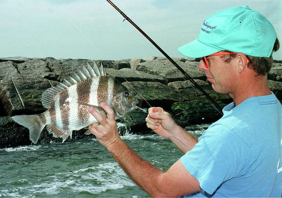 During cold-weather months, jetties along the Texas coast are hot spots for sheepshead fishing as the mollusk-munching porgies, gathering ahead of their spring spawn, feed heavily on barnacles encrusting the rocks. Photo: Shannon Tompkins, STAFF WRITER / HOUSTON CHRONICLE