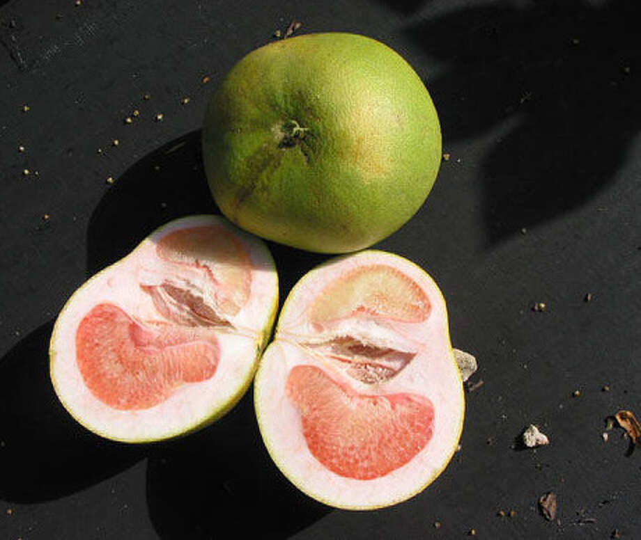 Lopsided growth, as seen in these grapefruit, is one of the symptoms of 'citrus greening' disease. There is no known cure. Photo: Courtesy Photo / courtesy of Florida Department o