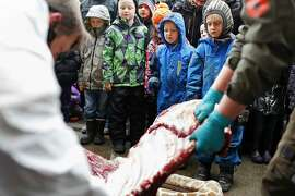 Children watch as Marius, a male giraffe, is dissected, at the Copenhagen Zoo, in Denmark, Sunday, Feb. 9, 2014. Copenhagen Zoo turned down offers from other zoos and 500,000 euros ($680,000) from a private individual to save the life of a healthy giraffe before killing and slaughtering it Sunday to follow inbreeding recommendations made by a European association. The 2-year-old male giraffe, named Marius, was put down using a bolt pistol and its meat will be fed to carnivores at the zoo, spokesman Tobias Stenbaek Bro said. Visitors, including children, were invited to watch while the giraffe was dissected. (AP Photo/Polfot, Rasmus Flindt Pedersen)  DENMARK OUT