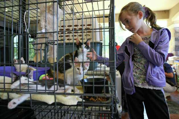 Volunteer Abbey Anderson, 10, pets cats of a recent wildfire evacuee at Wildwood United Methodist Church, Saturday in Magnolia. Banfield Pet Hospital in Magnolia is offering free boarding to pets of recent wildfire evacuees. They can be reached at 281-259-0027. (Eric Christian Smith / For the Chronicle) Photo: Eric Christian Smith, For The Chronicle