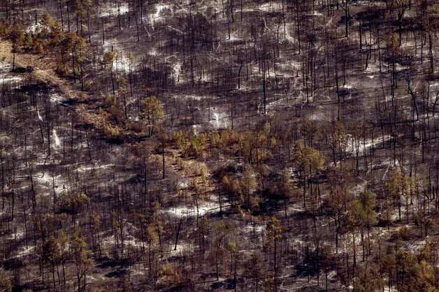 Charred forest is left behind after a fight a large wildfire near Magnolia, Texas on Saturday, Sept. 10, 2011, in Magnolia, Texas. Photo: Smiley N. Pool, Houston Chronicle / © 2011  Houston Chronicle