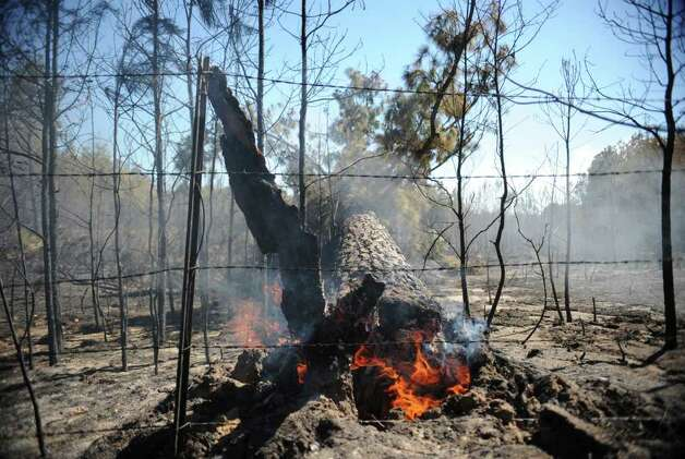 The trunk of a tree burns in a wooded area off of FM 323 in Anderson County, Texas Monday afternoon Sept. 5, 2011. Winds have caused many fires to spread and rekindle in the East Texas area. (AP Photo/The Tyler Morning Telegraph, Sarah A. Miller) Photo: Sarah A. Miller, Associated Press / Sarah A. Miller | Tyler Morning Telegraph