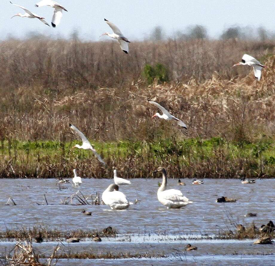 Anahuac National Wildlife RefugeGo east on Interstate 10, right at the Anahuac exit, and go south 2 miles to FM 562. Continue south on FM 562 for 8.3 miles to FM 1985, and 4 miles east to the entrance.Bank and wade fishing. Bring your own drinking water.