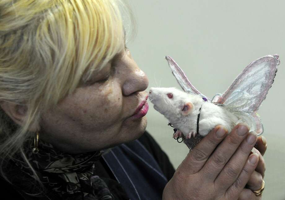 Every time a bell rings ...a pet rat gets his wings? (Rodent pet show in Minsk.) Photo: Viktor Drachev, AFP/Getty Images