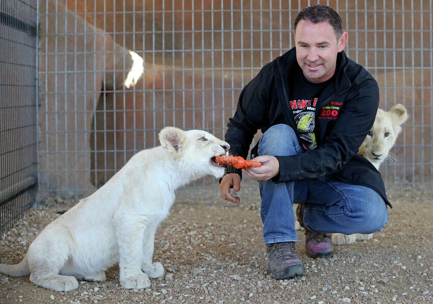 Snake Farm owner Eric Trager plays with the two white lion cubs as he shows his facility in New Braunfels on Feb. 13, 2014.