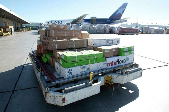 In this Jan. 9, 2014 photo, a load of flowers is rushed to a cooling unit at the Miami International Airport. Each year, 715 million flowers come through Miami International Airport. (AP Photo/J Pat Carter)