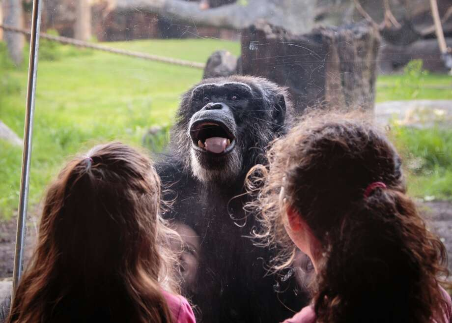 Fun Days at the Houston Zoo... My daughter and her best friend love interacting with the animals!Mari Paugh