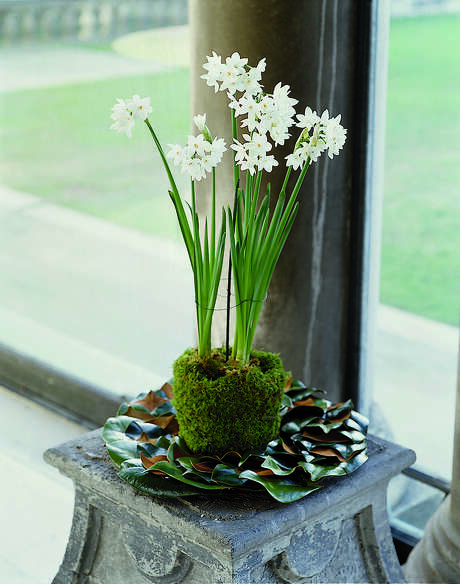 Note how the narcissus foliage is supported  in this moss pot.  Photo from The Garden in Winter by Suzy Bales Photo: Krause / handout email / Kathy Huber