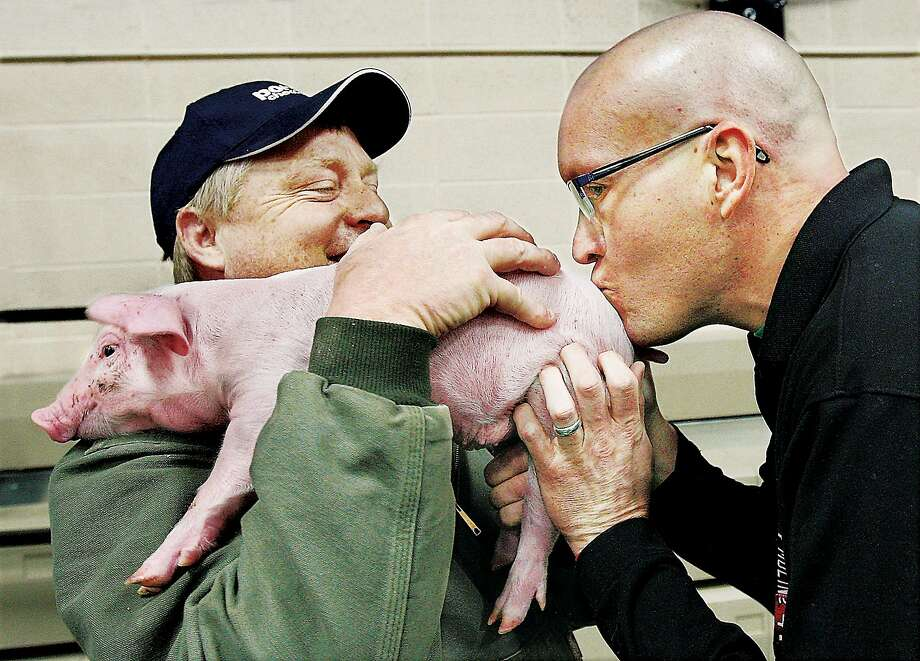 "Porker face: North Elementary School fifth-grade teacher Jason Chapman kisses the wrong end of a piglet, causing students to squeal in Alton, Ill. The Kiss the Pig assembly ""punished"" teachers whose classes raised the fewest dollars for leukemia and lymphoma research, but bussing the backside was Chapman's own idea. Photo: John Badman, Associated Press"